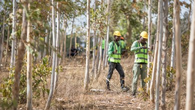 أبل تطلق صندوق استثماري بقيمة 200 مليون دولار لمشاريع ترميم الغابات