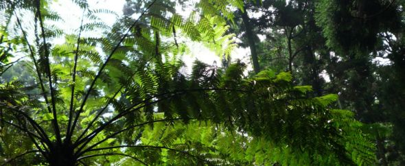 Taiwan palm