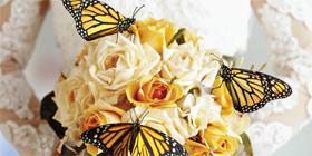 Monarch hospice