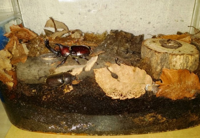 Terrarium pour scarabée rhinocéros - 19