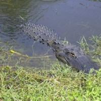 Bienvenue sur Swamp Media