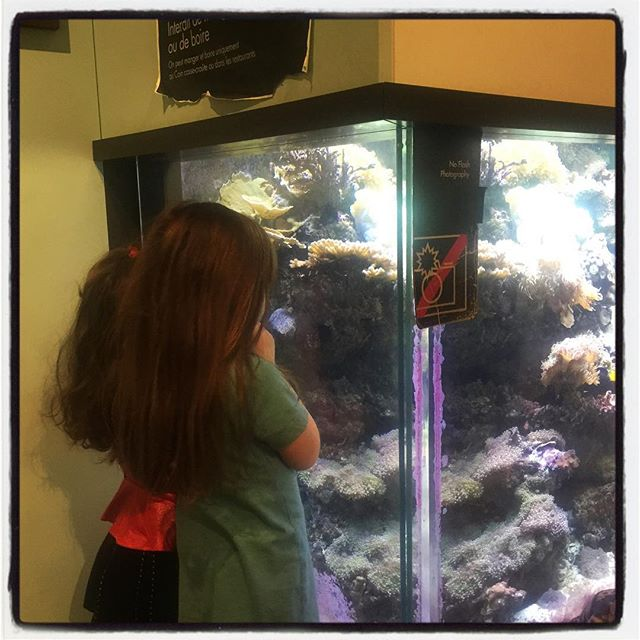 Trying to fine Nemo and Dory #atROM