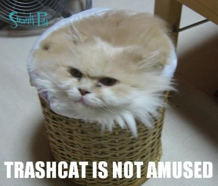 trash cat