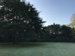 Swanland House Residential Home, Swanland, Care, Care Home, Fresh, Garden, Morning