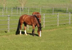 Horse rehabilitation in oregon - Swan Training