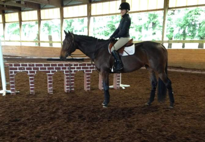 horse and rider standing in indoor arena - swan training