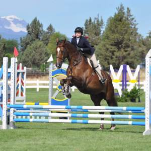 horse for sale in oregon, gelding, jcrew