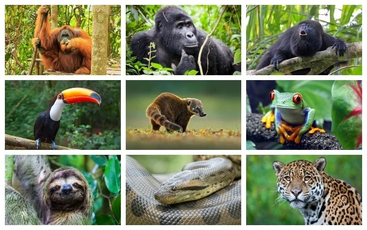 And scientists think there are many more left to discover. 25 Rainforest Animals That You Should Know About Swedish Nomad