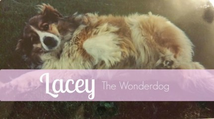 JEI {8}: Lacey the Wonderdog