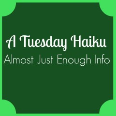 A Tuesday Haiku