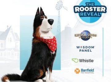 Wisdom Health The Rooster Reveal
