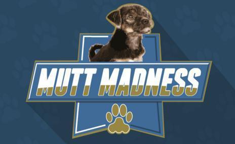 95.7 BEN-FM Mutt Madness Giveaway
