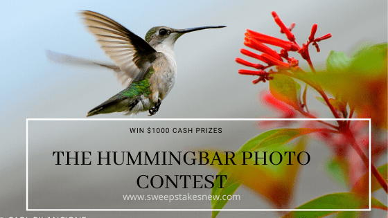 The Hummingbar Photo Contest