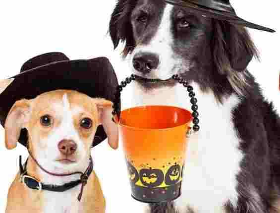 KOIT Halloween Pet Photo Contest - Win Tickets