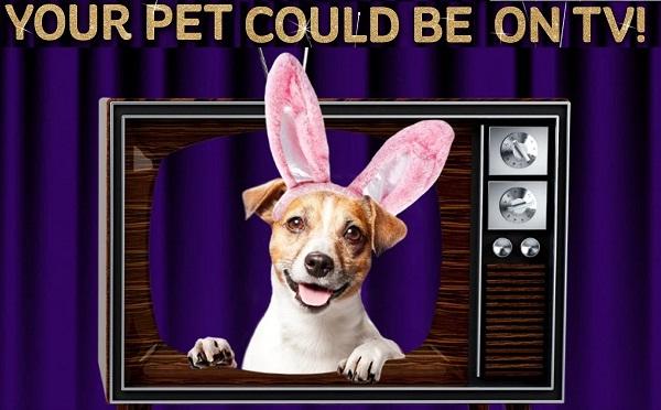 Cadbury Bunny Tryouts Contest - Win Cash Prizes