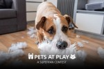 Sony Rewards SuperFan Pets at Play Contest