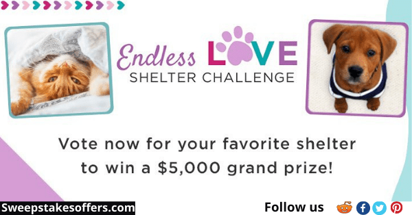 Endless Love Shelter Challenge Contest
