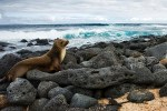 Galapagos Islands Sweepstakes - Win A Trip