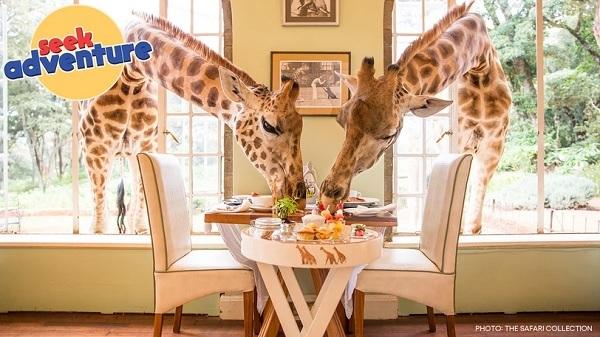 Omaze Giraffe Manor Sweepstakes