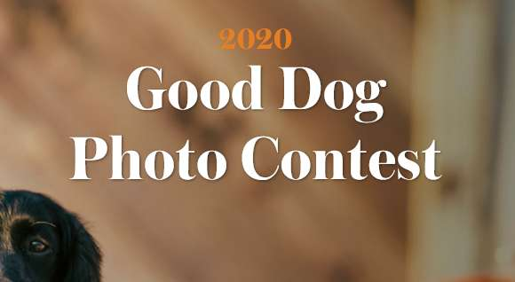 G&G's 2020 Good Dog Photo Contest