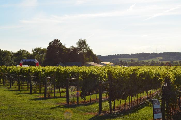 vineyard 7
