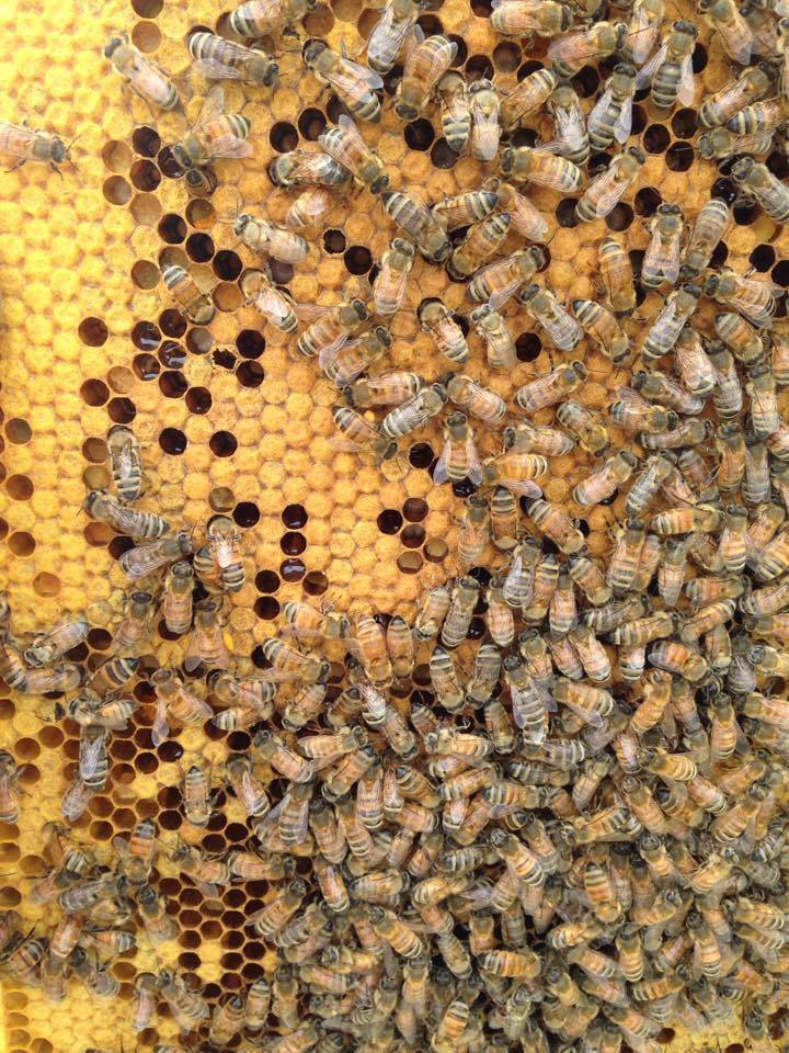 Look at that hive go!