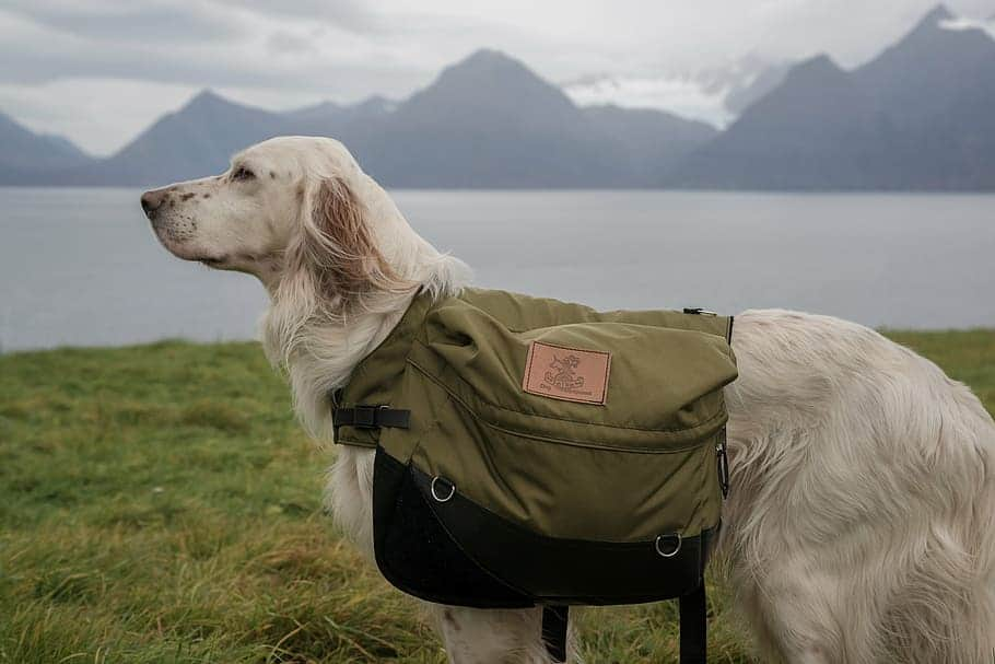 how much weight can a dog carry
