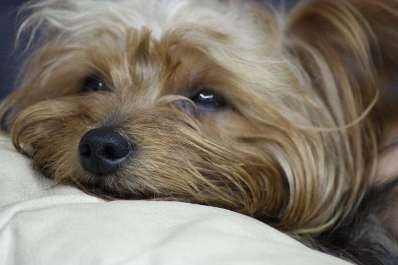 signs your dog is sick