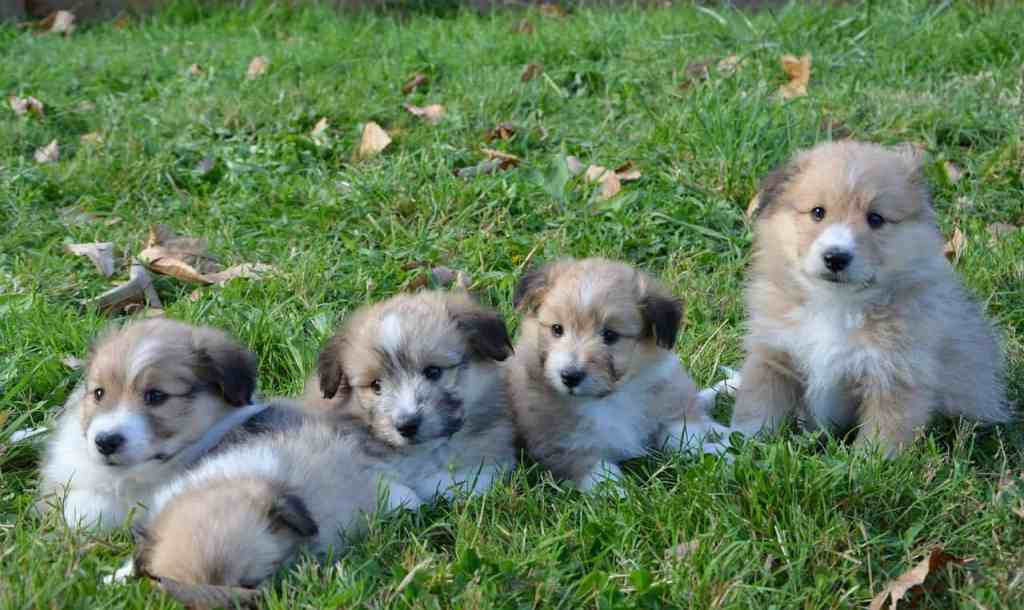 sudden death in puppies