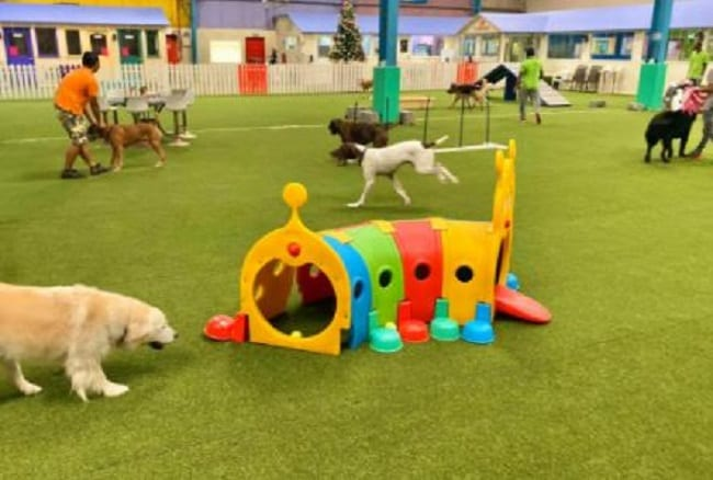 dog play ground