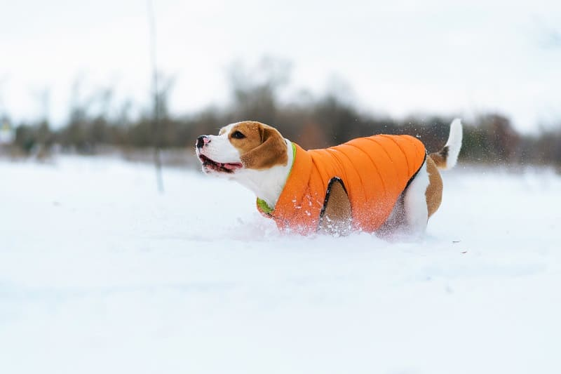 how to protect a dog from cold weather