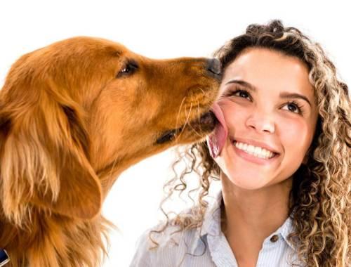 perché il cane lecca