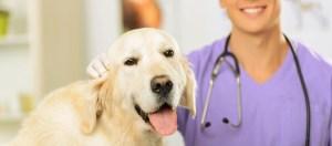 veterinario torsione gastrica