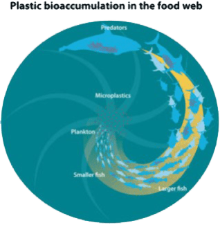 Plastic Bioacumulation
