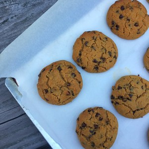 nut free paleo chocolate chip cookies