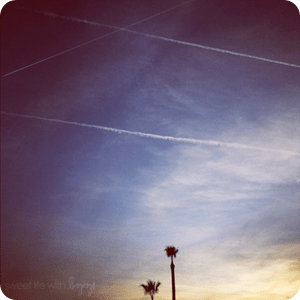 palms and planes