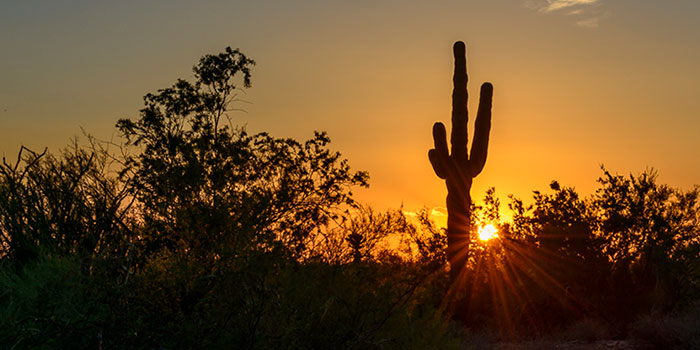 Iconic Saguaro Sunset