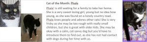 Cat of the month: Phale