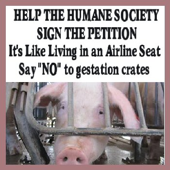 It's cruel and inhumane for pork producers to immobilize pigs -- who are social, intelligent, and active animals -- in cramped gestation crates day and night for virtually their entire lives. I pledge to help pigs by being part of the campaign to end gestation crates! #SCRF