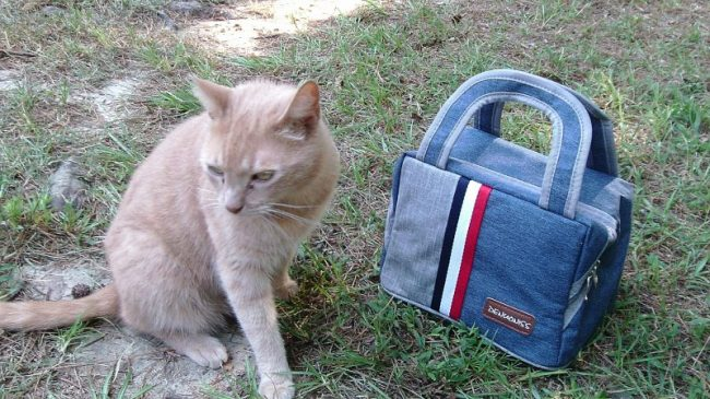 Insulated Lunch Tote and our cat Squeaks