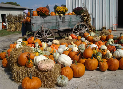 How to Choose the Best Pumpkin & Gourds - Legend of Stingy Jack O'Lantern and History of Jack-o-Lantern