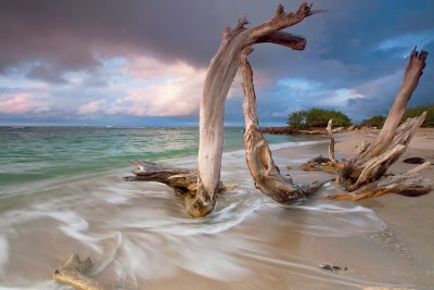Driftwood Sunset - Driftwood stands resolute against the tide at sunset. Taken on a remote beach on the Caribbean island of Nevis.