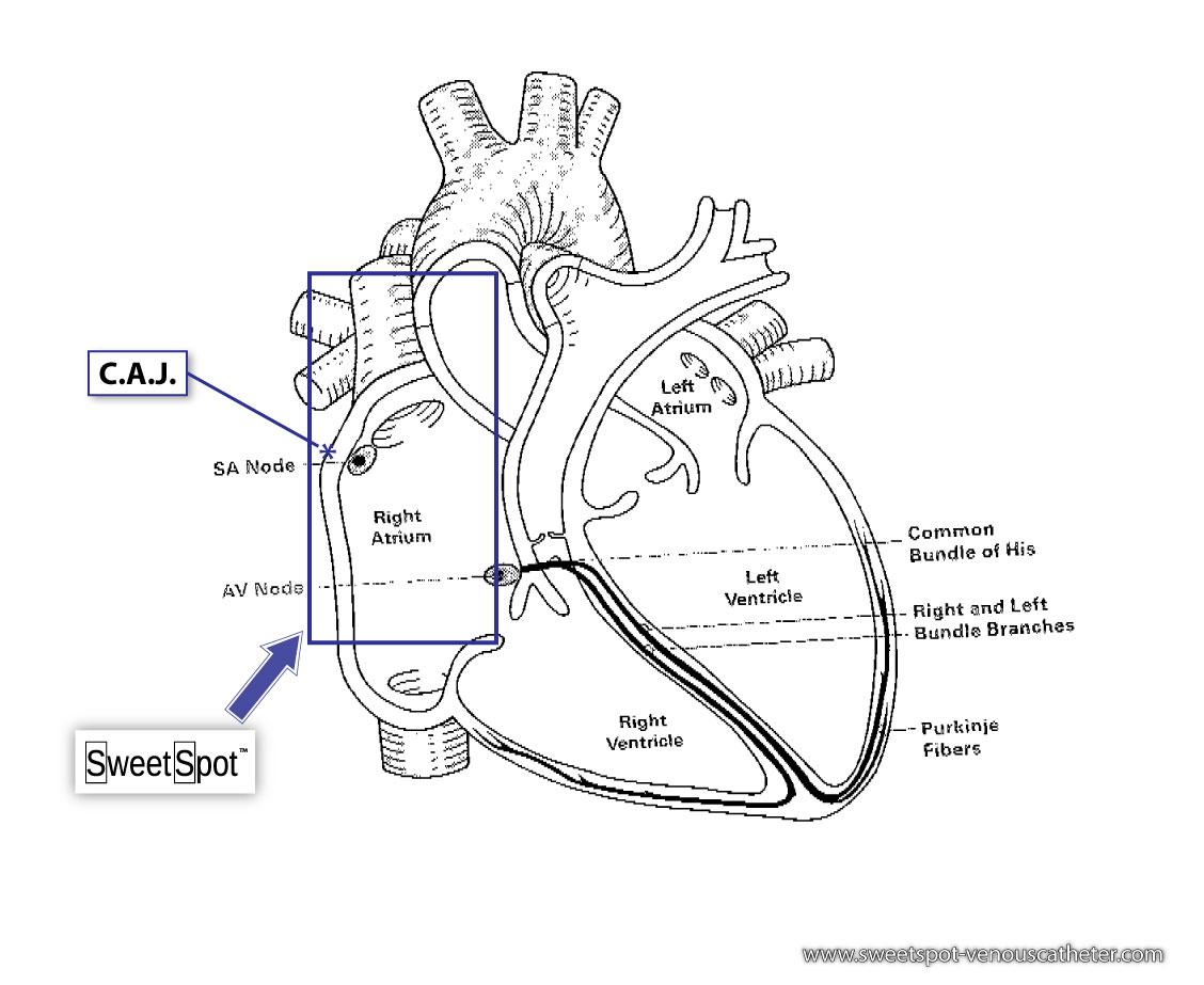 Cardiac Region Diagram