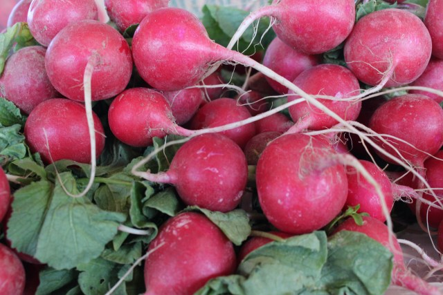Radishes in Season