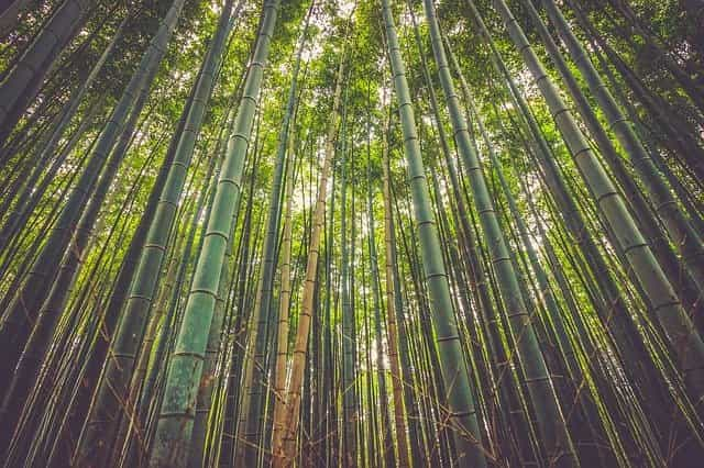 bamboo textile environmental issues