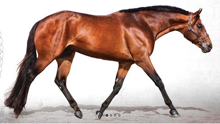 BID NOW – AQHA Professional Horsemen Crisis Fund INTERNET Auction