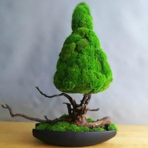 Drzewko z mchu stabilizowanego bonsai