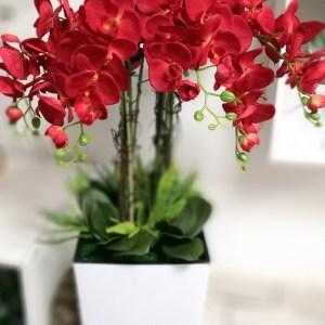 Czerwony storczyk w białej, dużej donicy