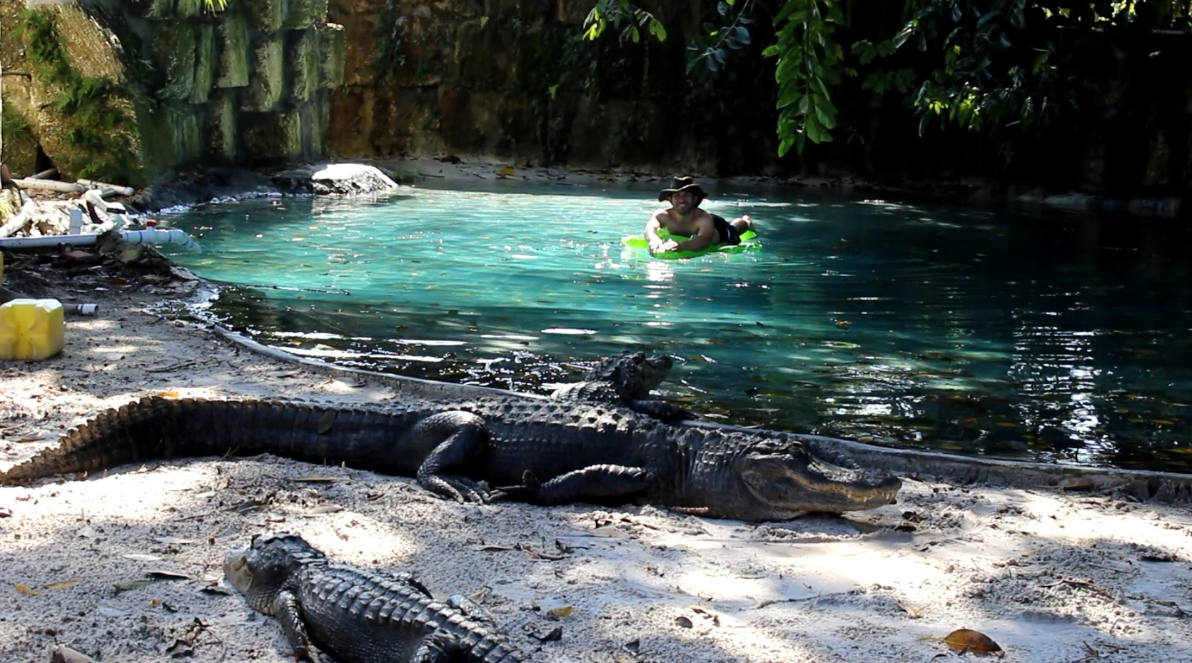 Man swims through pool of alligators on blow up crocodile Blow up alligator for swimming pool