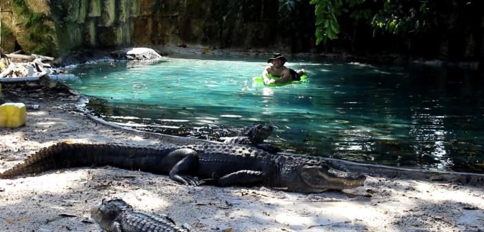 Man Swims Through Pool Of Alligators On Blow Up Crocodile